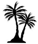 Palm tree bild — Stockfoto