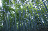 Bamboo forest seen from the side — Stock Photo