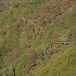 Forest canopy as seen from above — Stock Photo