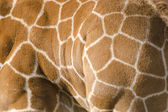 Background pattern of giraffe skin — Stock Photo