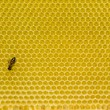 Honeycomb pattern with bee — Stock Photo