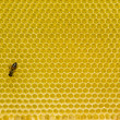 Stock Photo: Honeycomb pattern with bee