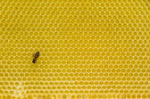 Honeycomb pattern with bee — Stockfoto