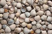 Sea shells, background — Stock Photo