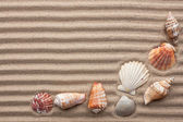 Seashells amid undulating sand — Stock Photo