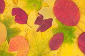 Fundo de folhas de outono — Foto Stock