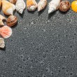 Stock Photo: Seashells on black background of water