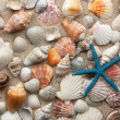 Sea shells and starfish on sand — Stock Photo