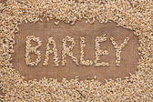 Word barley written on burlap — Stock Photo