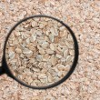 Flakes in magnifying glass — Stock Photo #22768264