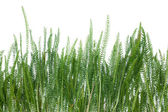 Grass growing on the field — Stock Photo