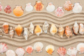 Seashells on the sand — Stock Photo