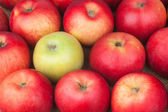 Green apple among red apples lying on sackcloth — Stock Photo