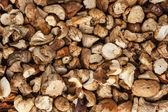Background out of dried mushrooms — Stock Photo