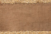 Barley lying on sackcloth — Stock Photo