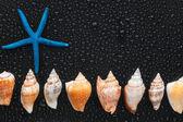 Seashells and starfish lie on a line — Stock Photo