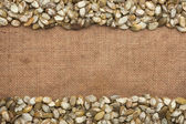 Pumpkin seeds were lying on sackcloth — Stock Photo
