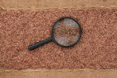 Magnifying glass lies on flax  seeds and sacking — Stock Photo