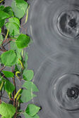 Green birch leaves in the water in the rain — Stock Photo
