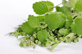 Mint and marjoram — Stock Photo