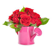 Red roses in a pink watering can — Stock Photo