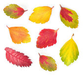 Autumn colorful leaves — Stock Photo
