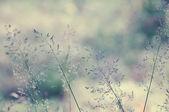 Lange gras weide — Stockfoto