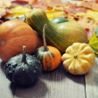 Small decorative pumpkins — ストック写真