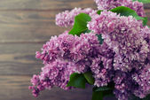 Lilac flowers — Stock Photo
