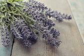 Bouquet lavender — Stock Photo