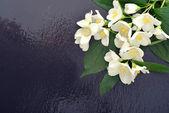 Jasmijn bloemen — Stockfoto