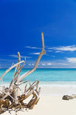 Tropical sandy beach with old dry wooden branch — Stock Photo