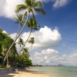 Stock Photo: Tropical Beach with coconut palm trees