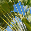 Palm tree branches over blue sky — Stock Photo
