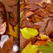 Autumn and child — Stock Photo
