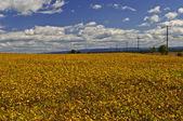 поле сельских сои — Стоковое фото