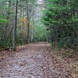 Wooded path — Stock Photo #35273073