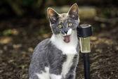 Jonge kat — Stockfoto