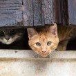 Cats on window — Stock Photo #15756921
