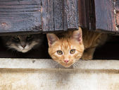 Cats on the window — Stock Photo