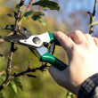 Stock Photo: Pruning