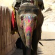 Painted elephant — Stock Photo #22768874
