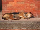 Dog on the street — Stock Photo