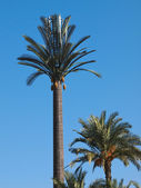 Plastic palm tree — Foto de Stock