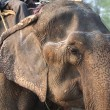 Elephant crying — Stock Photo #38135971