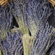 Dried lavender bunches — Stock Photo #16794759