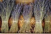 Dried lavender bunches — Foto Stock