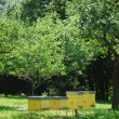 Yellow beehives — Stock fotografie