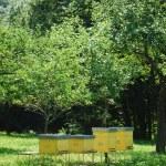 Yellow beehives — Stock Photo