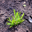 Green grass with earth crosscut — Stock Photo #14824013
